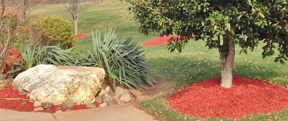 Red mulch spread around trees and throughout the landscaping at a home in %%targetarea1%, NY.